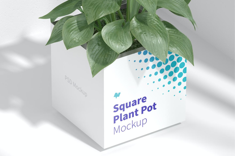 Steel Square Plant Pot Mockup, Top View