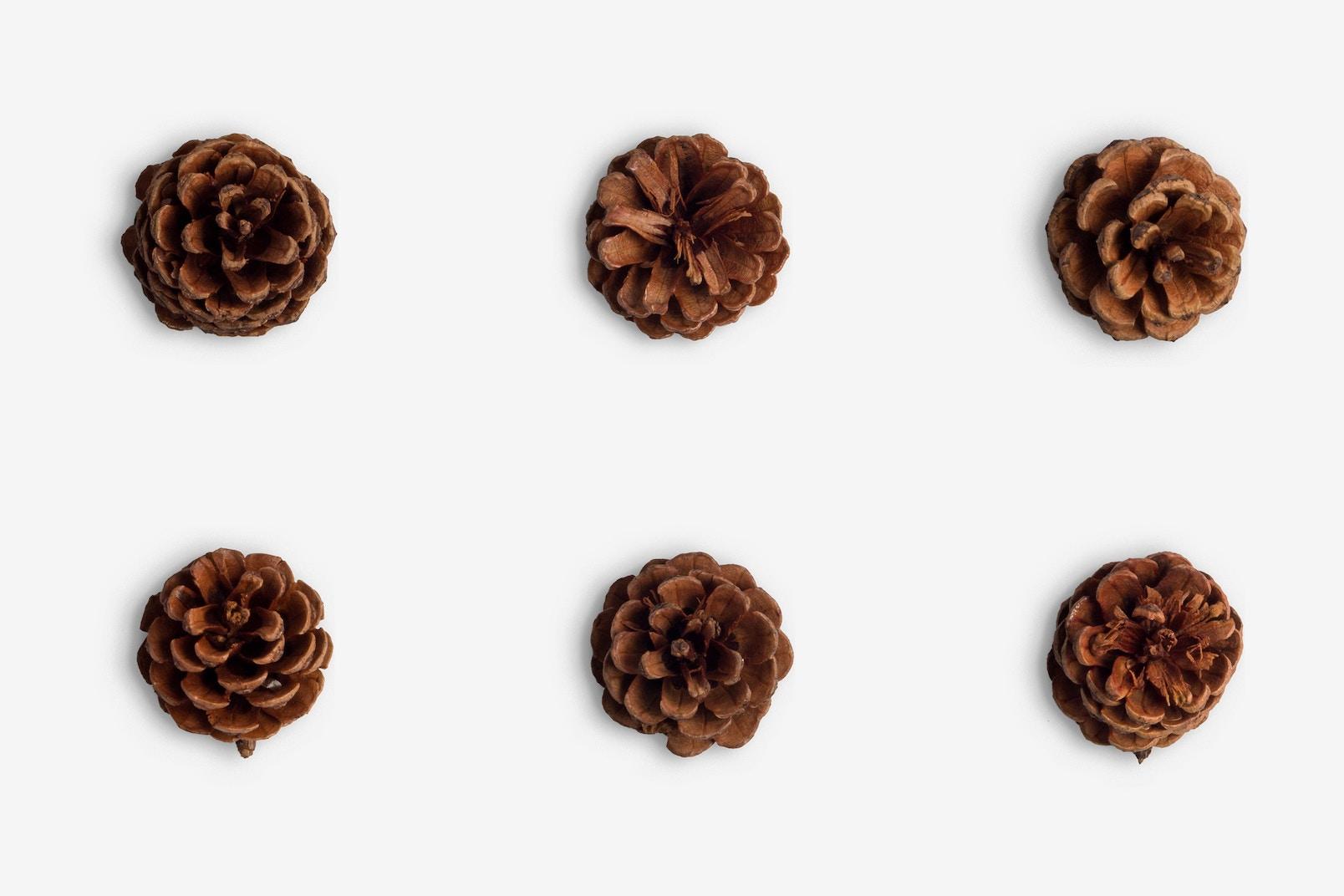 Christmas Pinecones Isolate 01