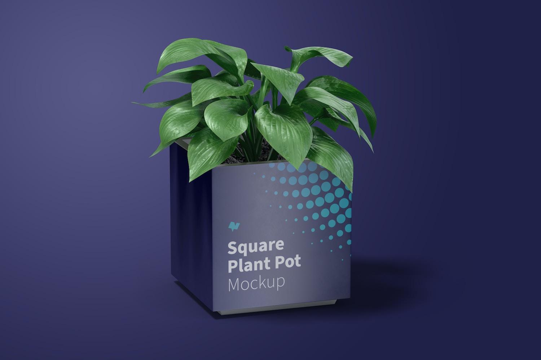 La planta le da un toque realista.