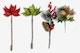 Christmas Flowers Isolate
