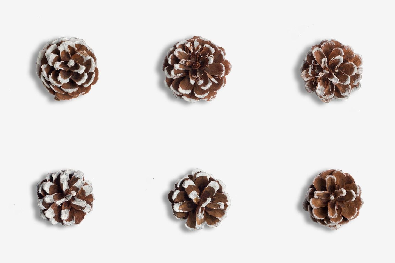 Christmas Snow Pinecones Isolate
